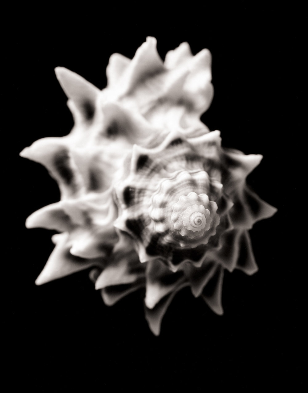 shell3_print11.jpg