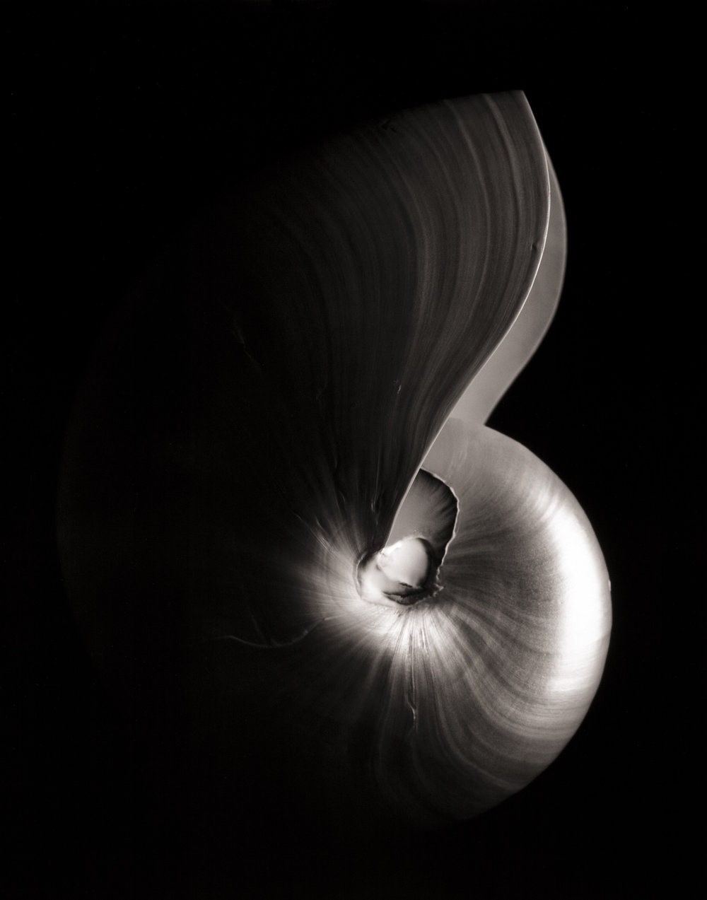 shell15_print15.jpg