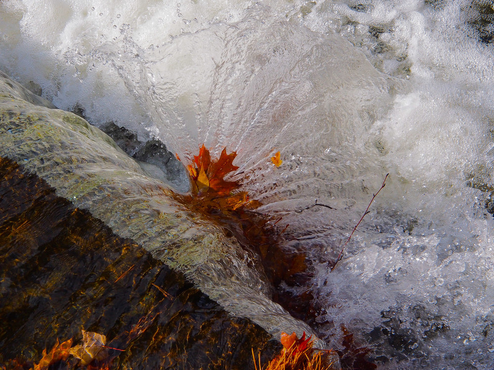autumnleafspray-cc-chapman.jpg