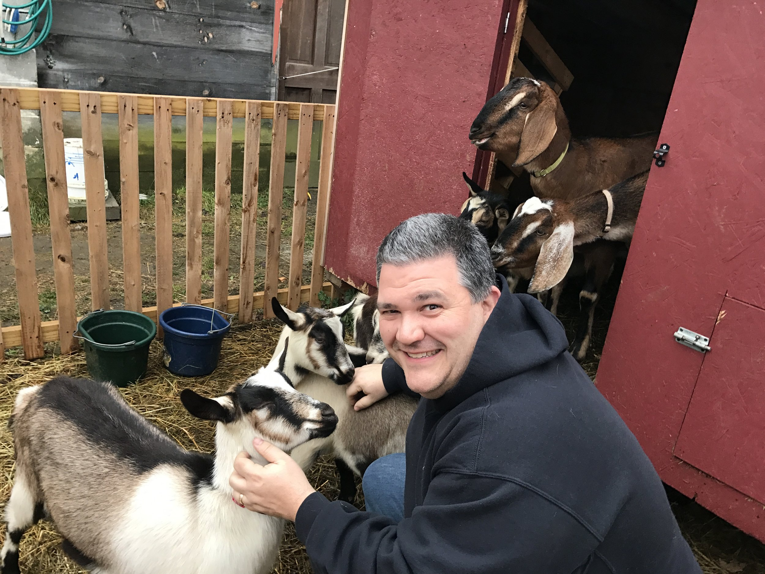Playing With Goats