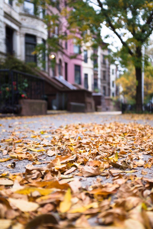 Park Slope .jpg