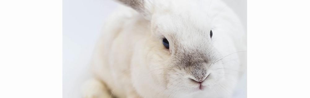 bunny cruelty free unsplash.jpg
