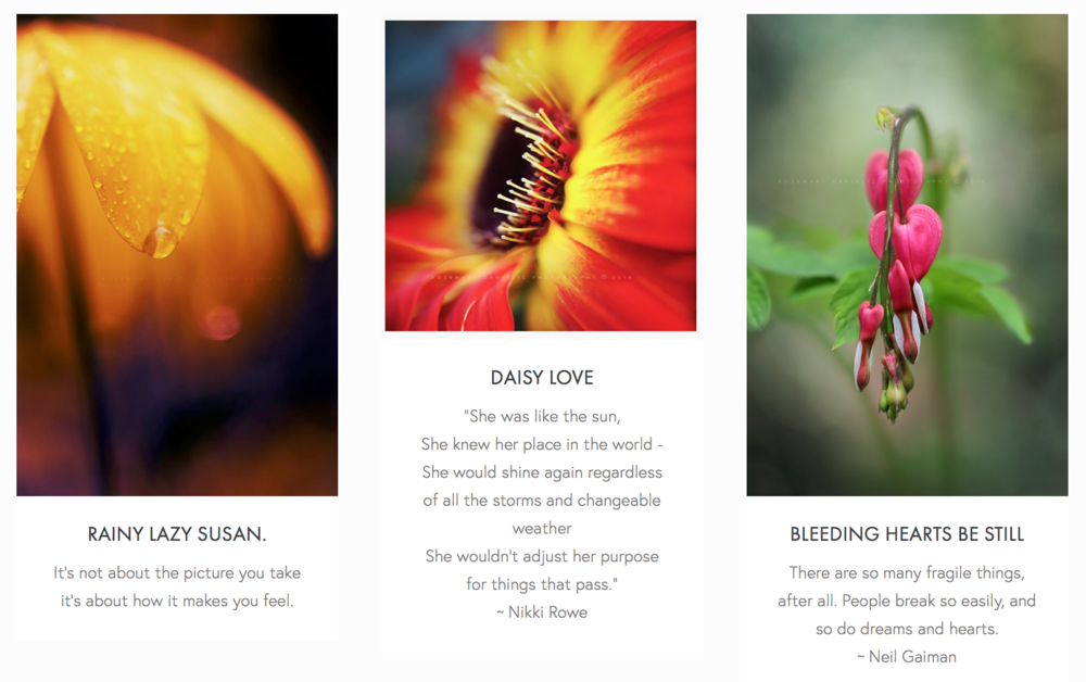 Screen Shot 2018-11-04 at 8.43.33 AM.png