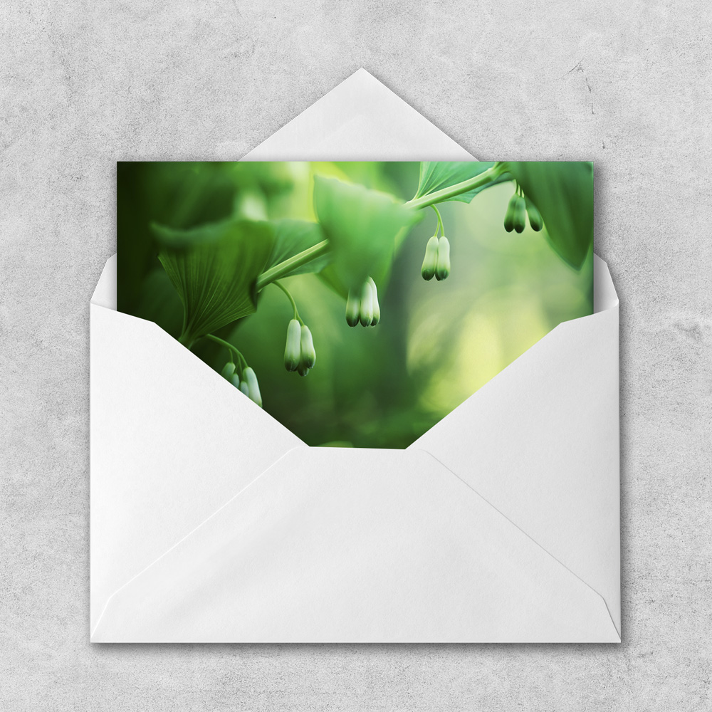 Take Your Heart for a Walk