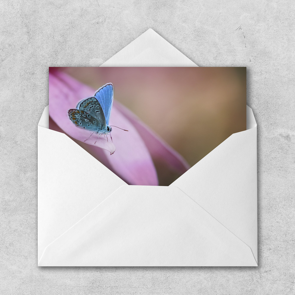 You Make my Heart Flutter