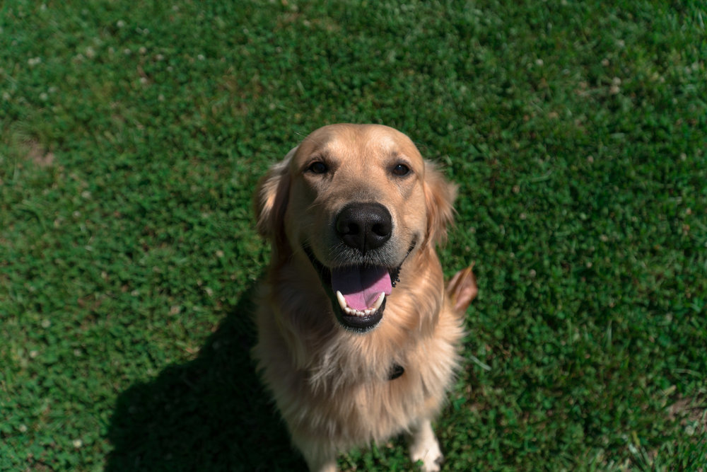 Veterinary_Compounding.jpg