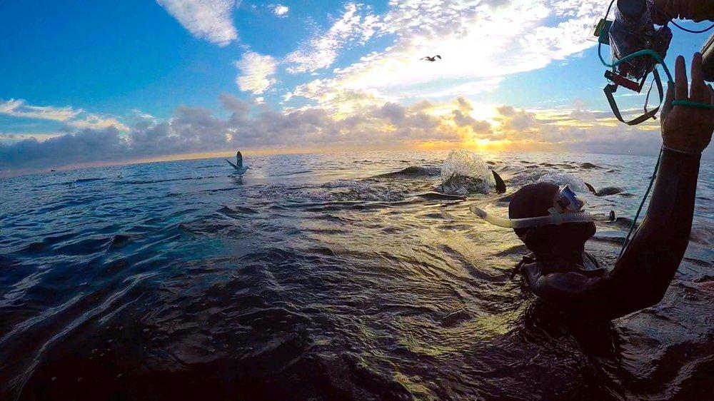 Bluefin shooting underwater.jpg