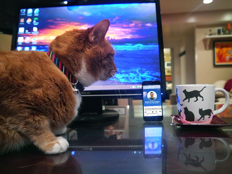 Cat.120306.jpg