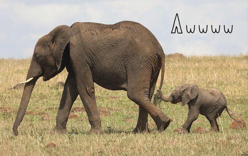 Elephants-for-online.jpg