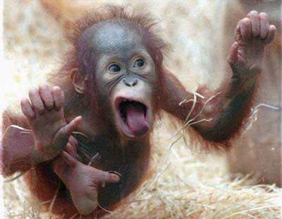 Tony-Wrighton-Chattering-Monkey-blog1.jpeg