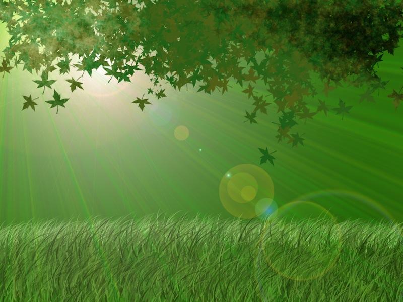 green-leafs-in-light-wallpapers_1882_1024.jpg