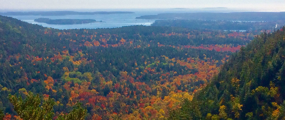 Fall colors in a wooded area with a water view Frenchman Bay near Bass Harbor, Maine.