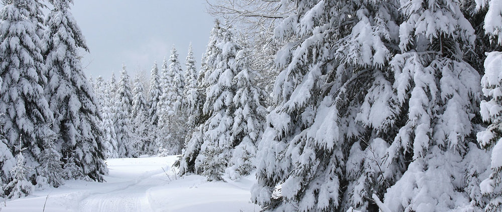 Cross country skiing trail through pine trees near Acadia National Park.