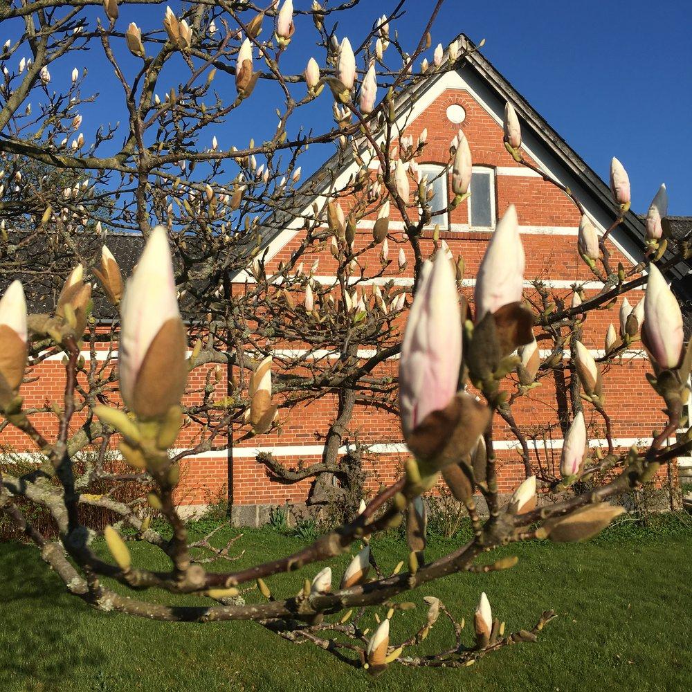 Forår træer i spring (6).JPG