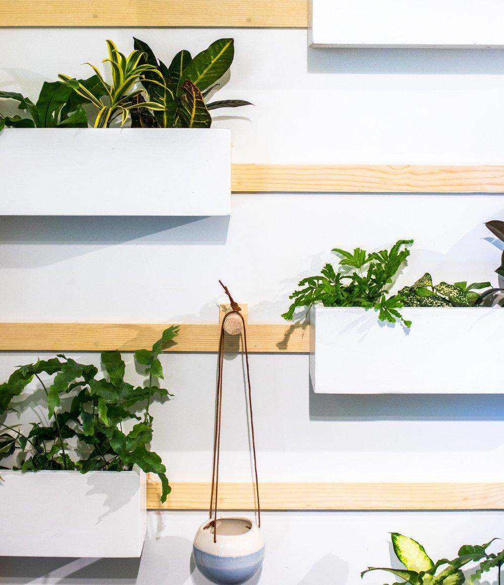 Customized hanging plant arrangement.