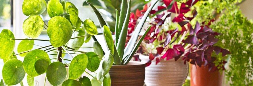 planthealth3.jpg