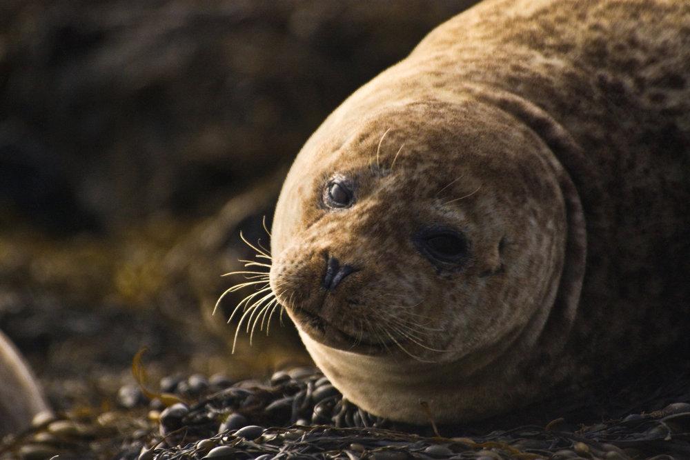 Seal Portrait.jpg