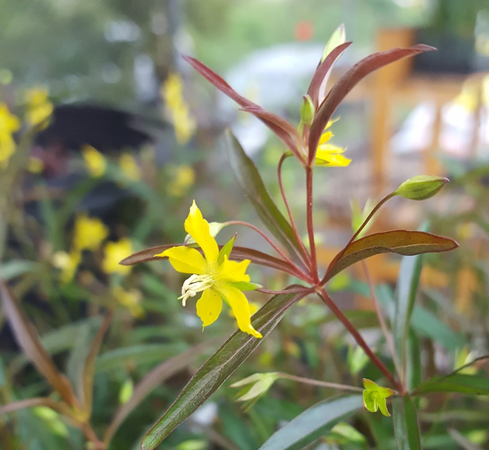 small yellow flower.jpg