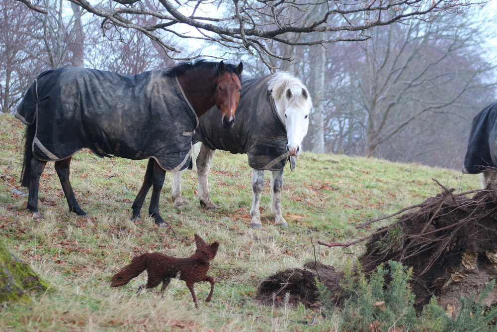 HR vicky the vixen and the horses.JPG