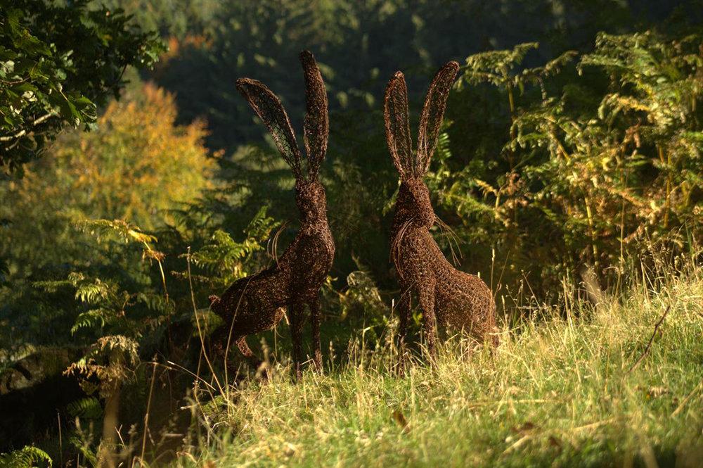 hare couple.jpg
