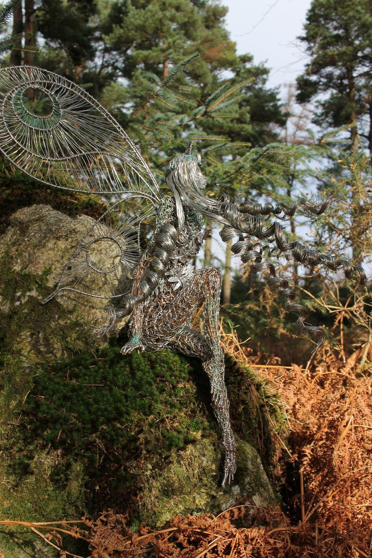 your Irish fairy Fern. -