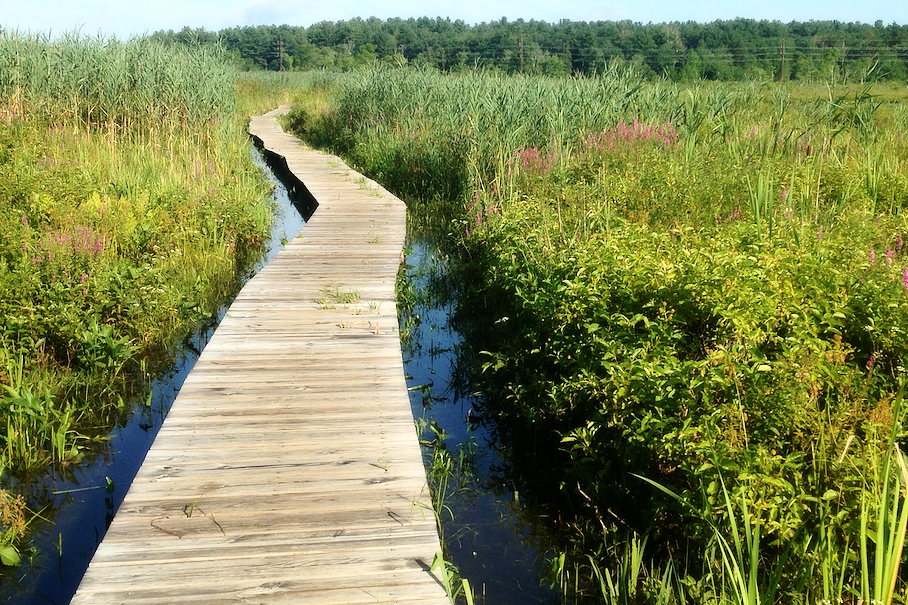 Little Pond Boardwalk - ⏱ Sunrise to Sunset📍 Entrance on Whites Woods Road, Litchfield🥾 Boardwalk, Bird Watching