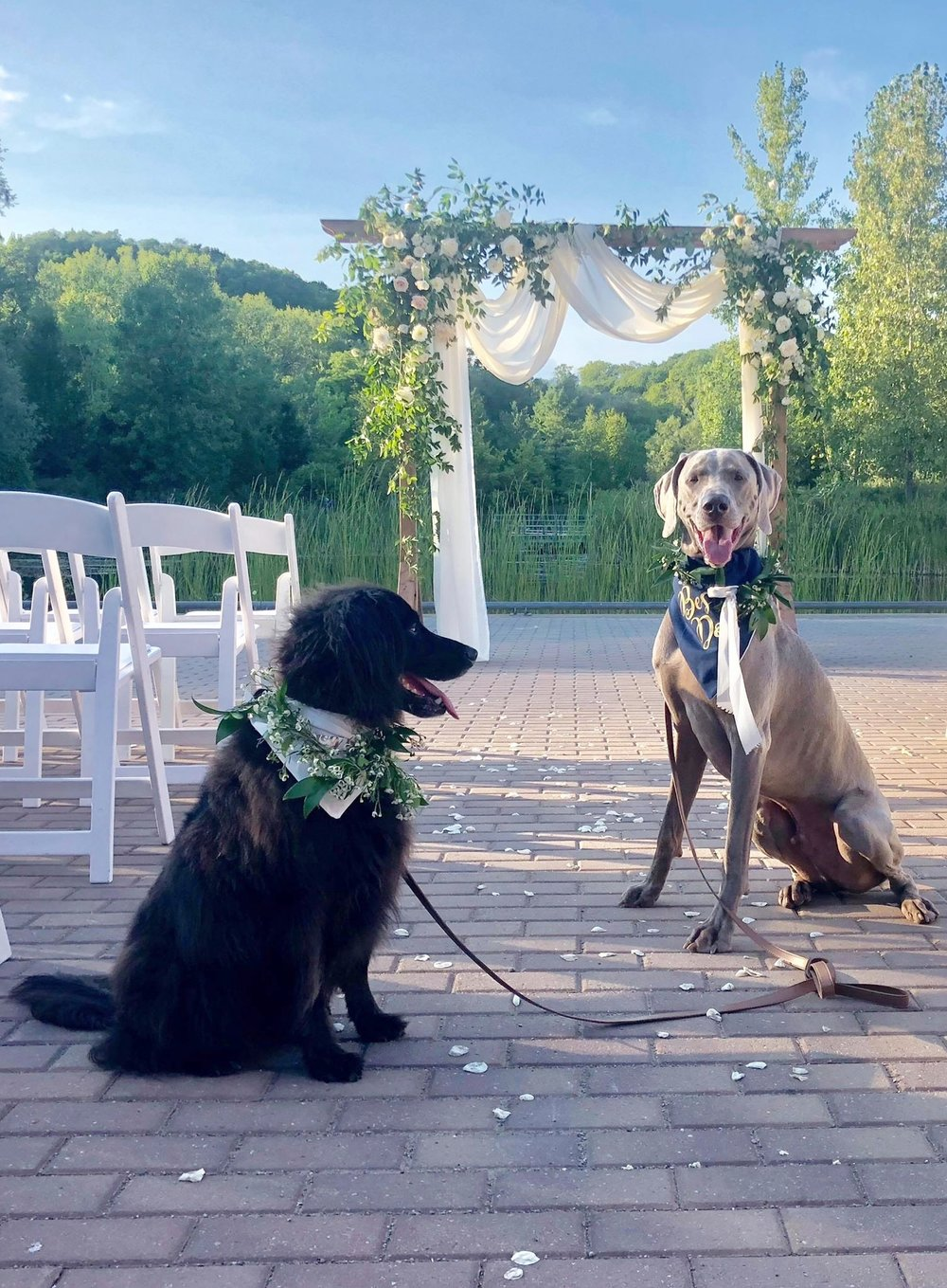 Wedding Day Dog Handler - How could you call yourself a dog mom or dad without including your fur baby on the big day? The rehearsal dinner, the wedding ceremony, photoshoot and the reception will all be a lovely stress-free experience with Katie.