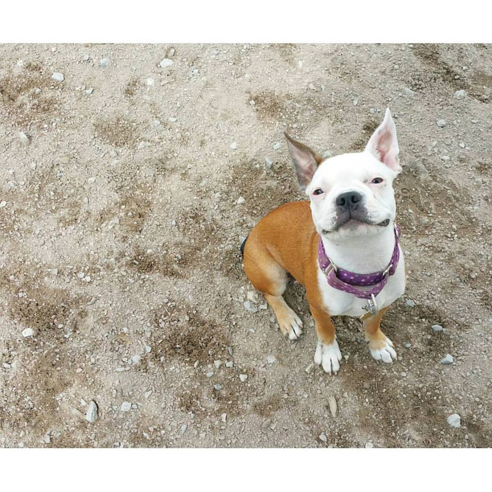 """Jaimmie riley, client since 2015 - """"Katie has been the dog walker for my dog Beans for about two years now. There is no one I would rather use, and no one beans would rather walk with."""""""