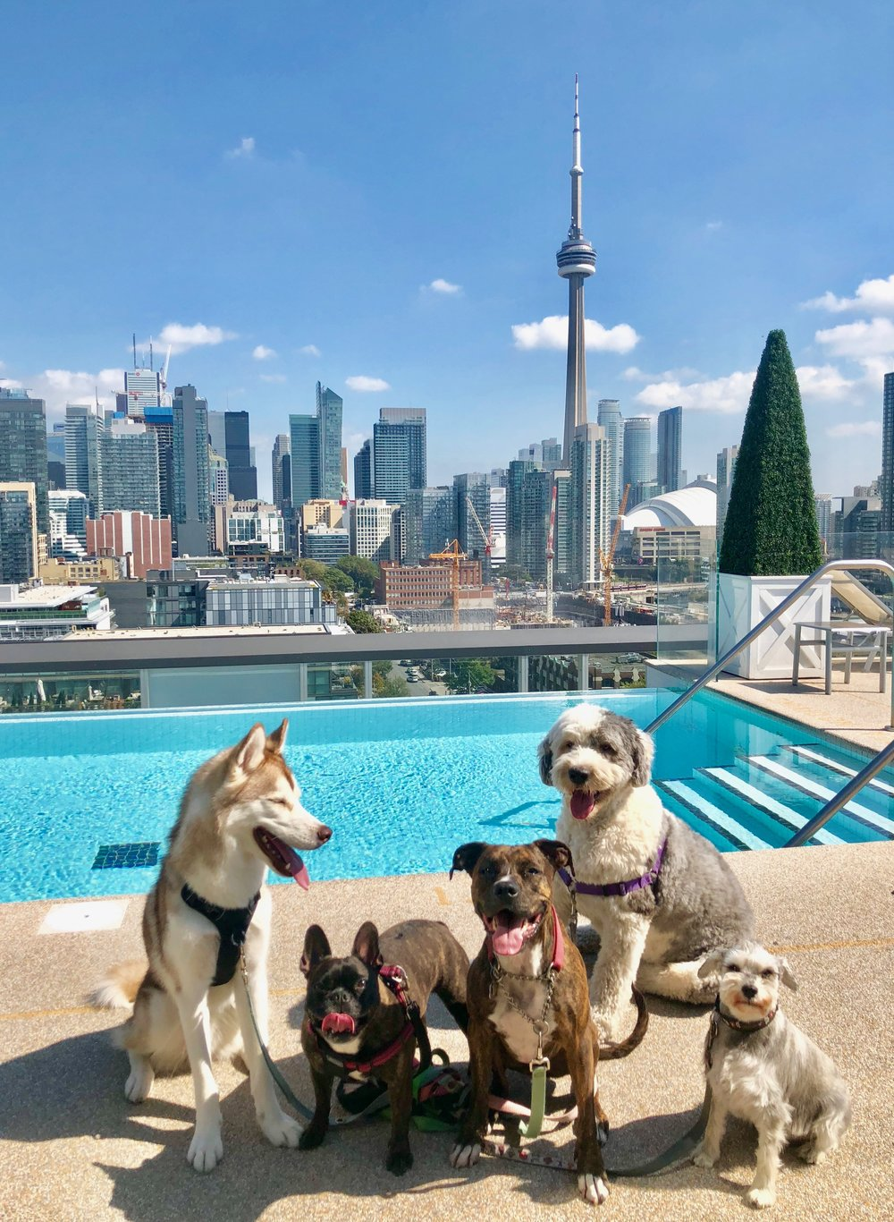 """Testimonials - """"Katie posts pictures on instagram, it is a great update and they are really creative and make me smile every day. You cannot go wrong by calling Katie – Reliable, Dependable and of course loves dogs!""""- Heather Posadowski, client since 2016"""