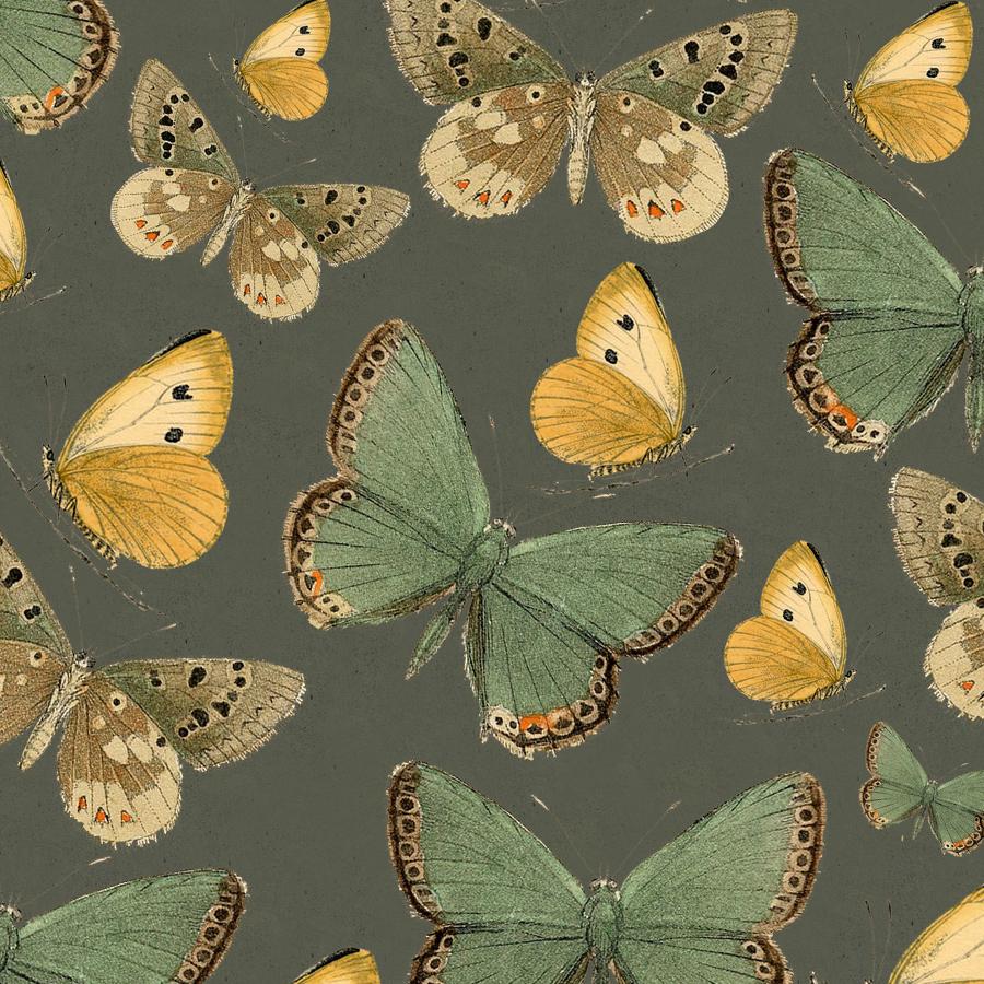 Butterflies Dark