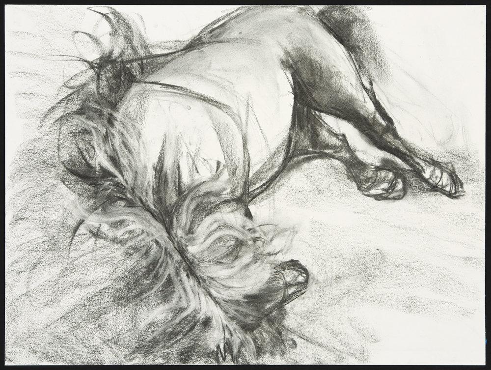"Gaefa  Charcoal on Paper (18"" x 24"")"