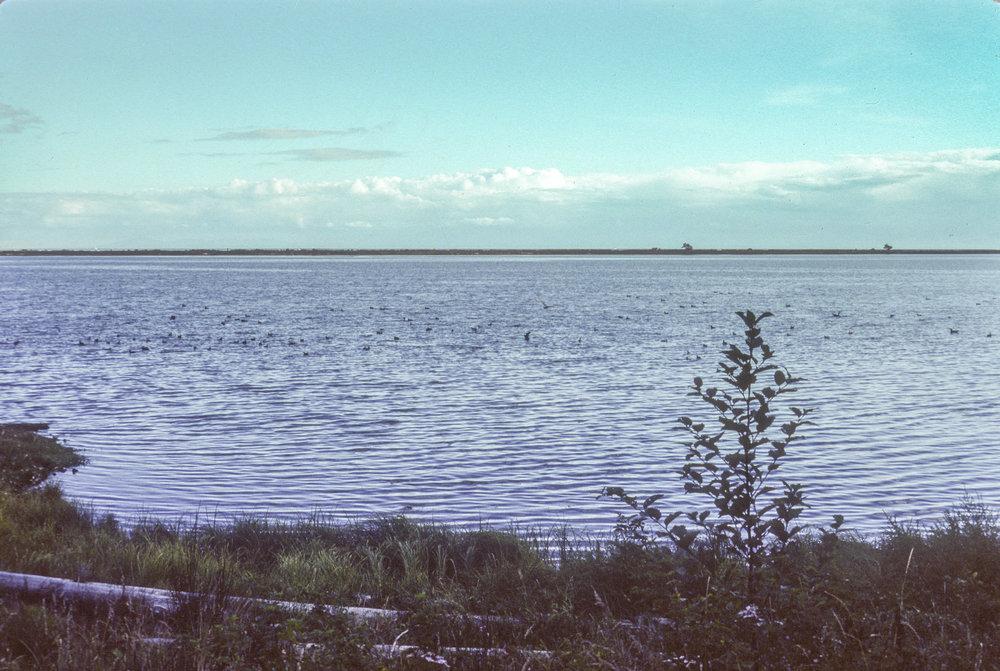 TDV 006 The Lagoon.jpg