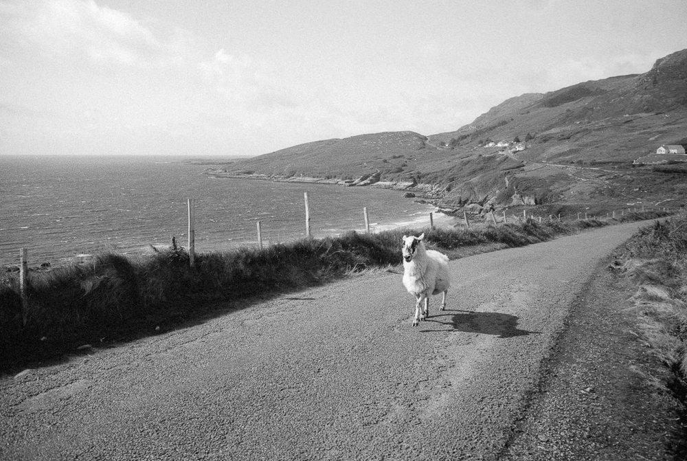 Siegfried-Salzmann-Fotografie-Irland 2018-3.jpg