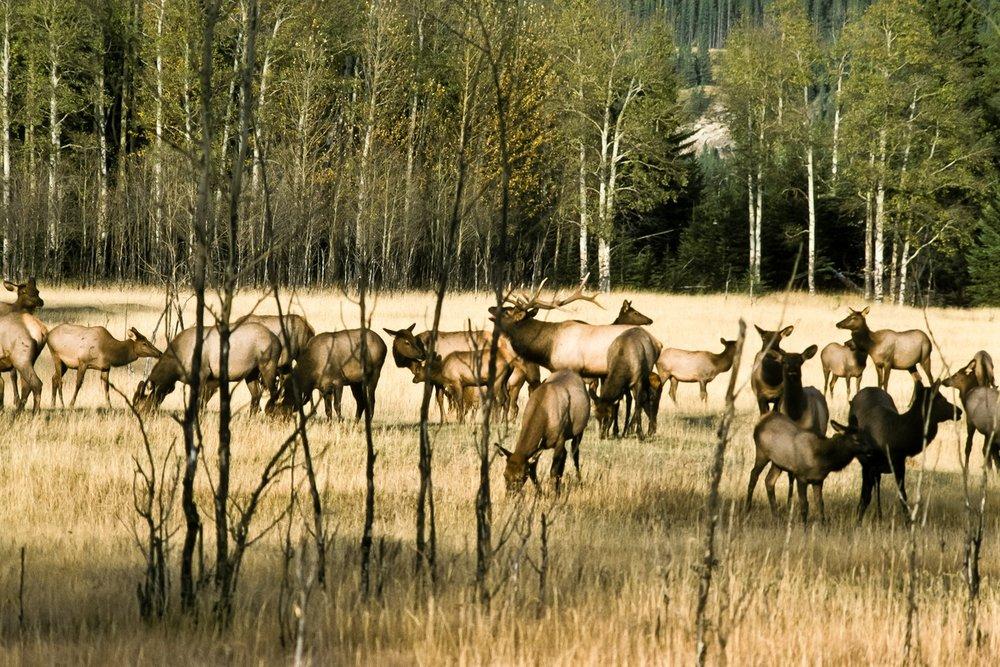 Siegfried-Salzmann-Fotografie-Kanada-Alberta-10.jpg