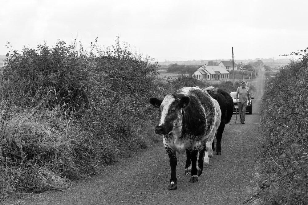 Siegfried-Salzmann-Fotografie-Irland 2014-6.jpg