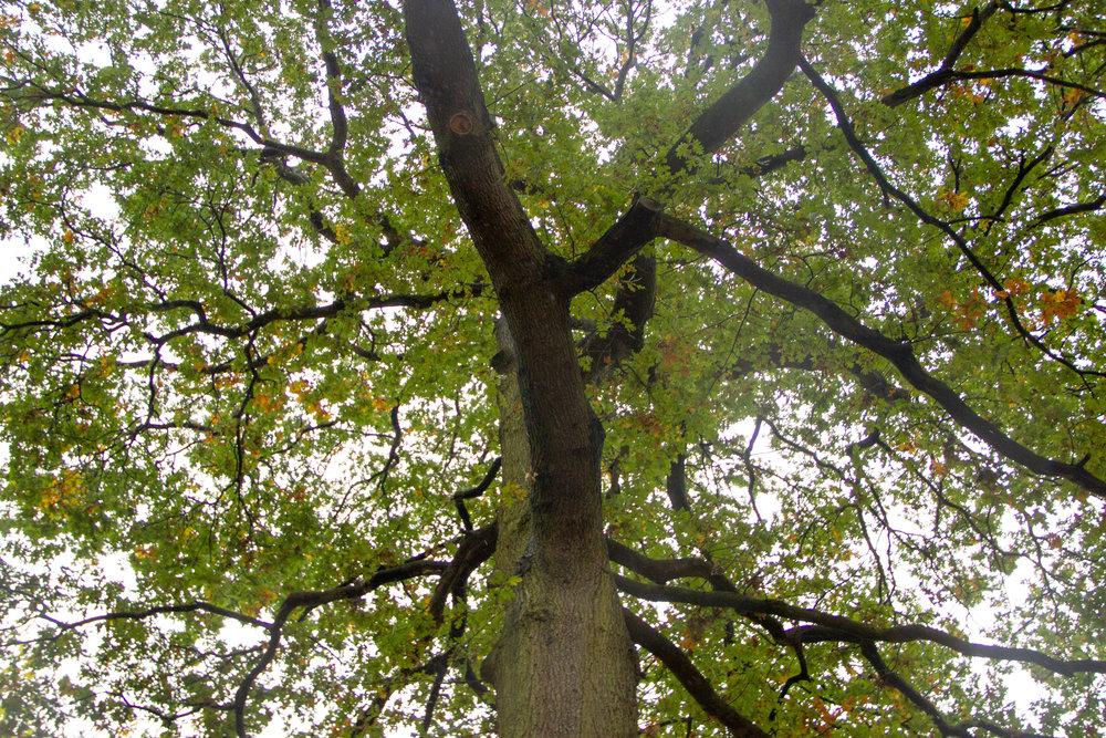 up_at_tree.jpg