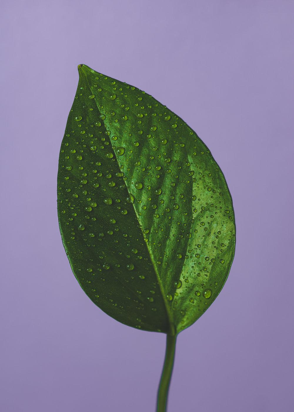 Flora-3.jpg
