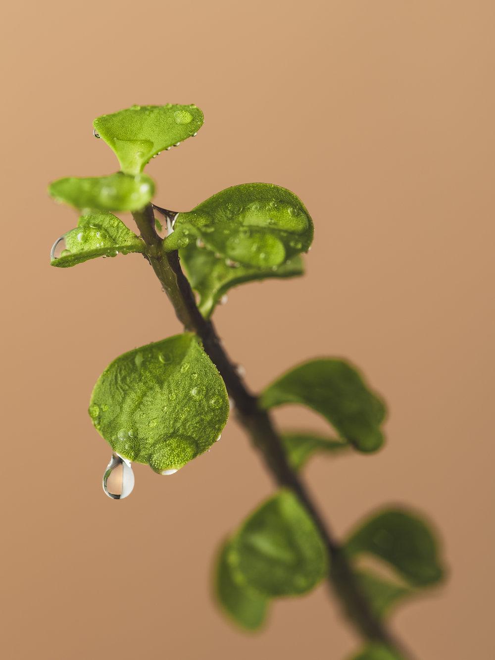 Flora-8.jpg