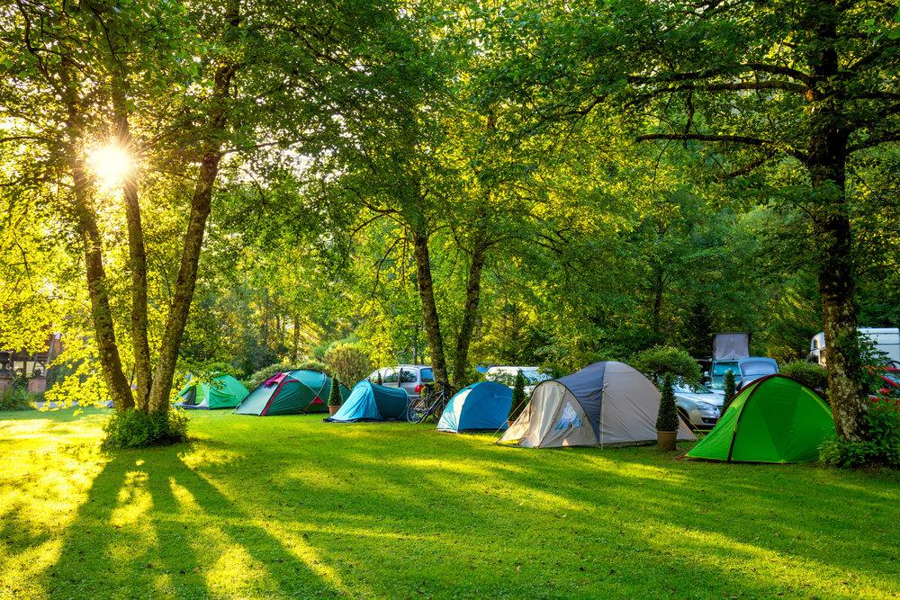 Sunny Campers.jpg