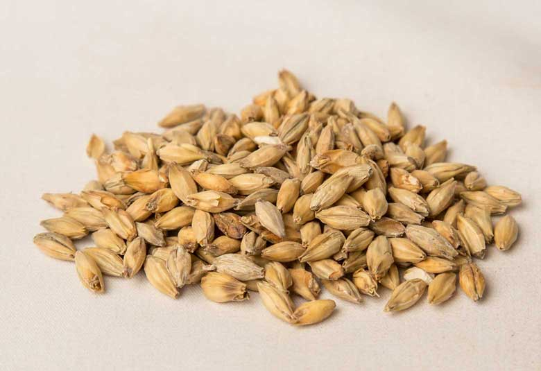 PILSNER - 2-row barley grown with malting specifications in mind. This malt is the lightest in color with higher enzyme activity, giving it a very sweet-malty backbone for any lager style brew.Available as 25 KG or 50 lbs crushed.