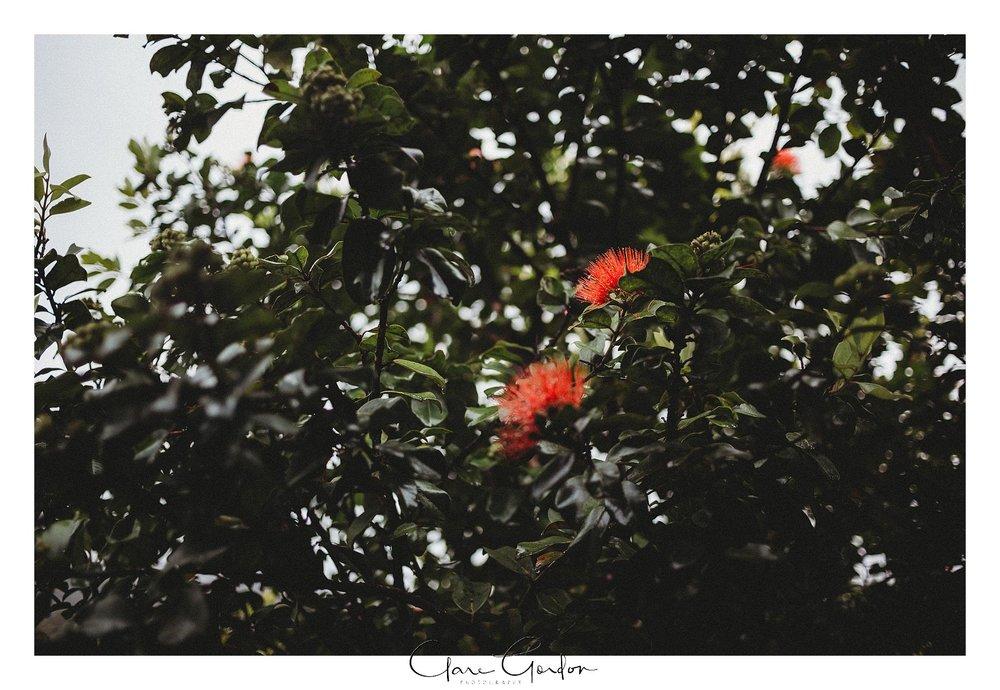 Tangiaro- Kiwi -retreat- Coromandel-Wedding-photo- (3).jpg