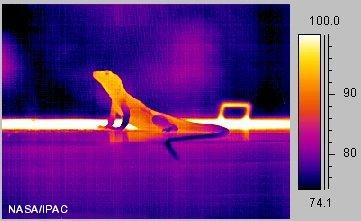 lizard5_ir.jpg