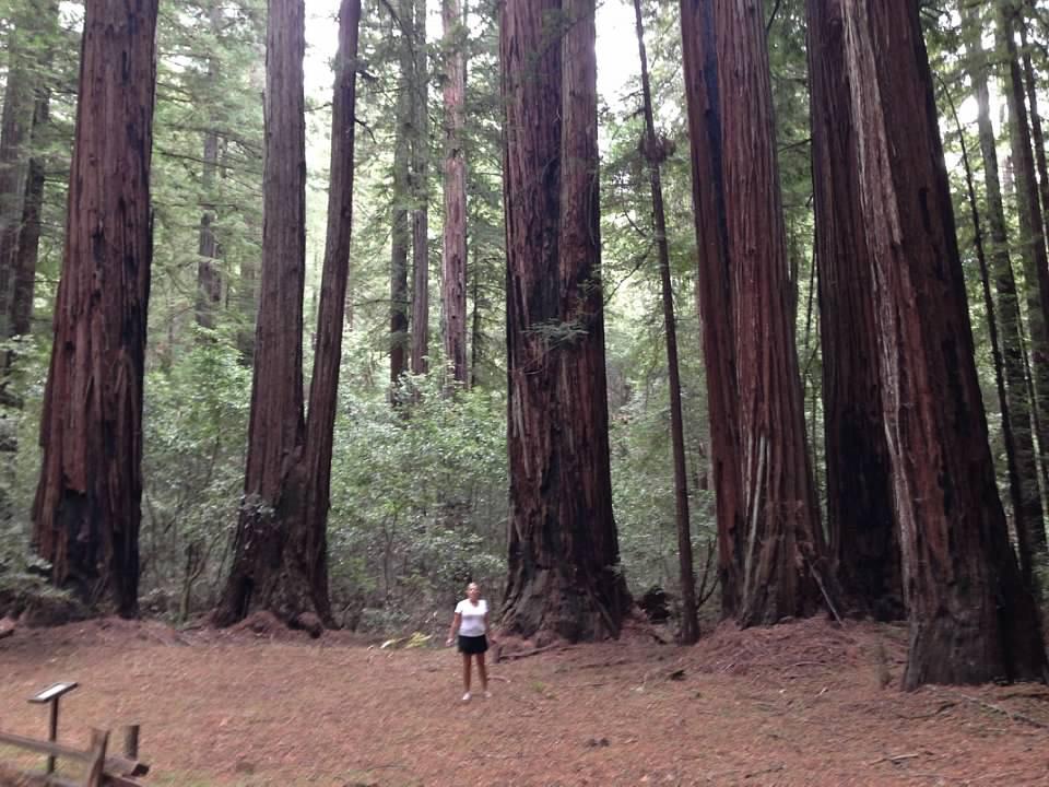 Karen King -  Sequoias - Nature