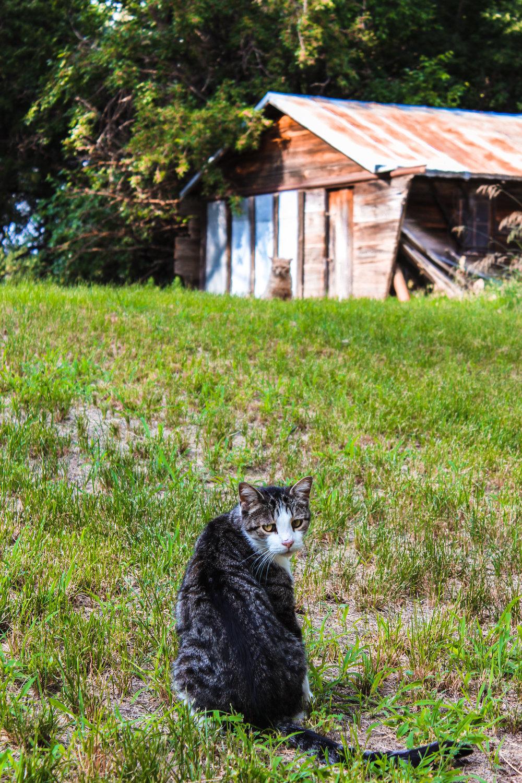 Pet Portraits 3.jpg