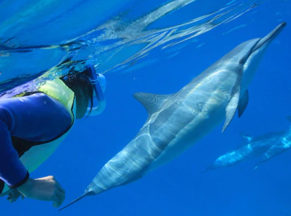 dolphin_kealakakua_-_Google_Search-2.png