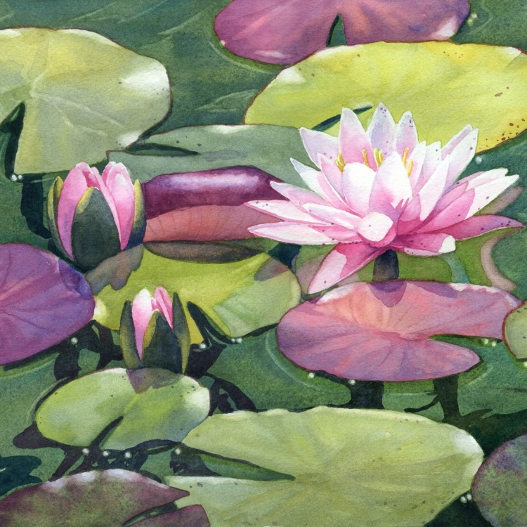 """Nymphaea"" Watercolor by Lorraine Watry"