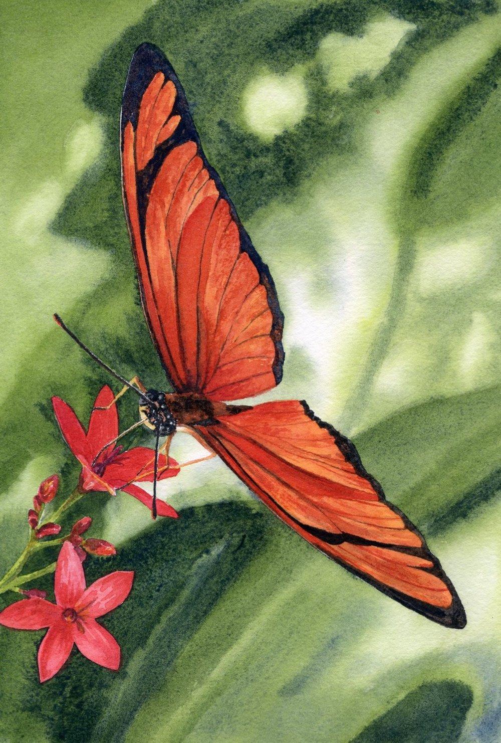 Tangerine Wings © Lorraine Watry