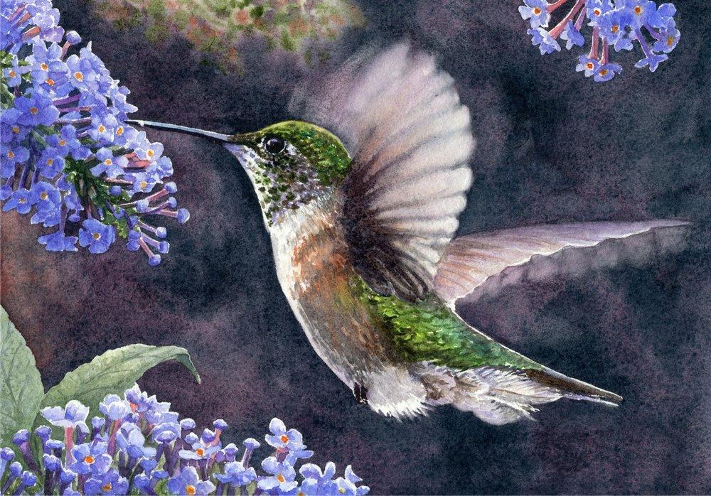 Gathering-Nectar-watercolor-Lorraine-Watry.jpg