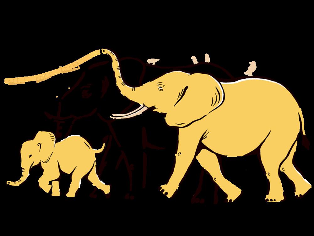 cranmore-elephants.png