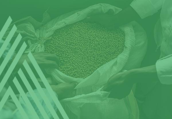 CÉRÉALES ET HORTICULTURE - Soutenir les différents acteurs du marché pour augmenter les revenus des petits producteurs en améliorant les rendements de leurs champs et leur accès au marché.